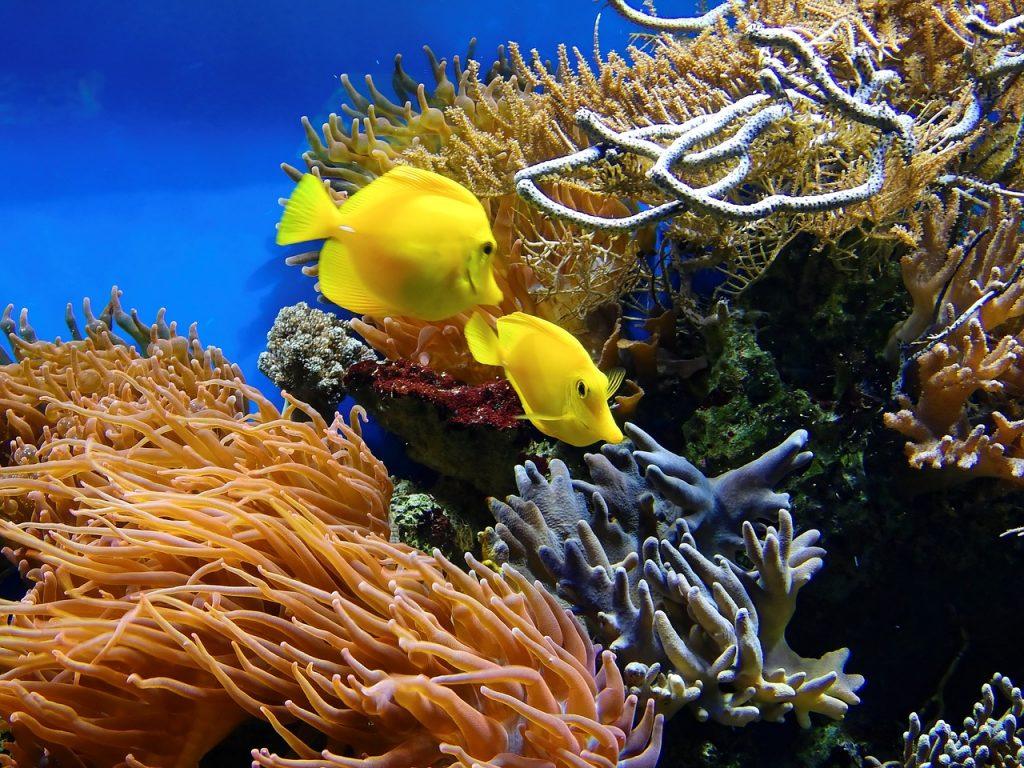 Hayman Island - Great Barrier Reef - Australia
